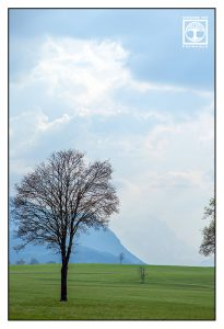 tree spring, spring meadow, green meadow, green hills, light clouds