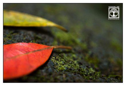 autumn leaves, autumn leaf, red leaf, yellow leaf, laurel, laurel leaf