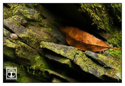 autumn leaf, orange leaf, moss stones