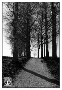 schwarzweissfotografie, schwarzweiss foto, Allee Schwarzweiss, Allee, Baum schwarzweiss