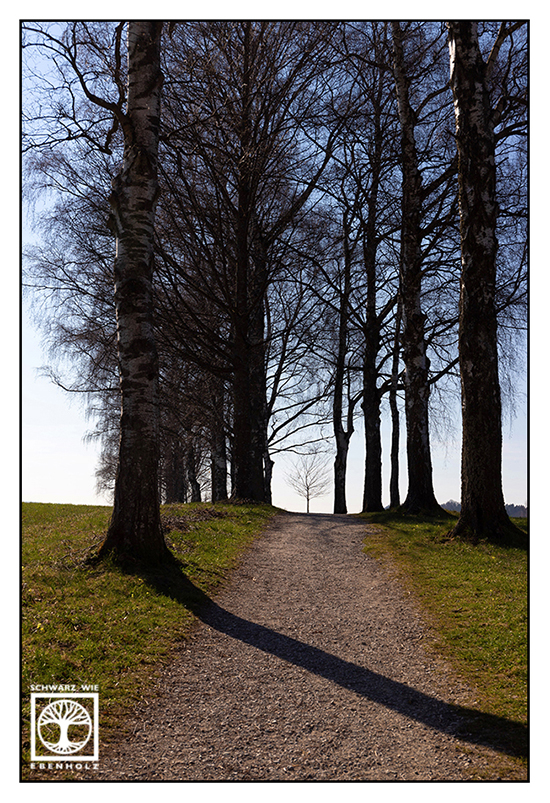 avenue, alley, spring, alley in spring, avenue in spring