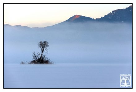 lonely tree, winter tree, winter mountains, winter fog, foggy mountains, alpenglow