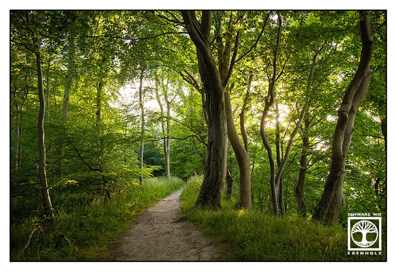 forest, woods, way, path, walk, walking, summer, green