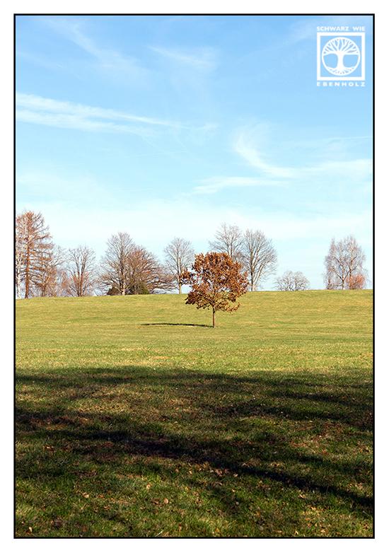 lonely tree, tree spring