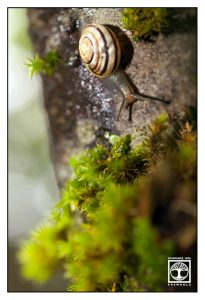 tiny snail, cute snail, snail
