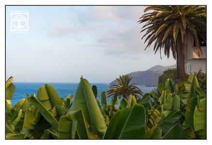 banana trees, banana plants, san andres, la palma