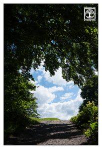 forest summer, way summer, Wamberg