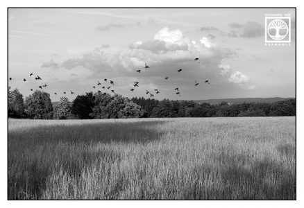 schwarzweissfotografie, schwarzweiss foto, Feld Schwarzweiss