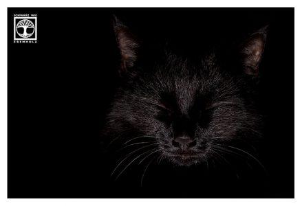 black cat low key, low key cat