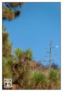 aloe vera blossom, alien tree, la palma