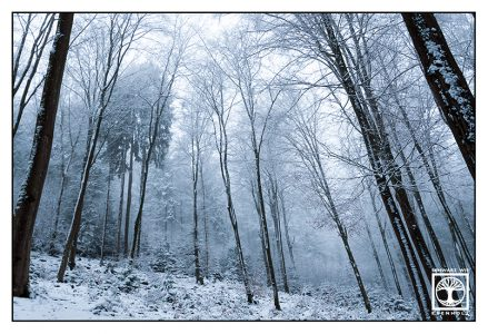 winter forest, winter trees, snowy trees, winter fog, foggy forest, Palatine forest, Pfalz, Germany