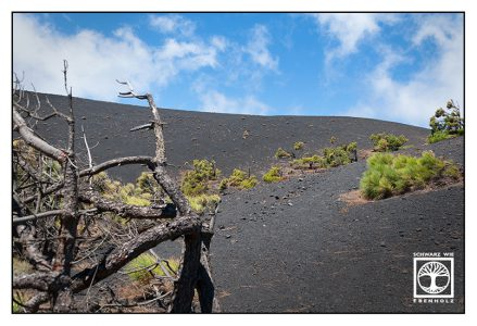 Fuencaliente, La Palma, volcano, volcanic landscape, volcanic vegetation