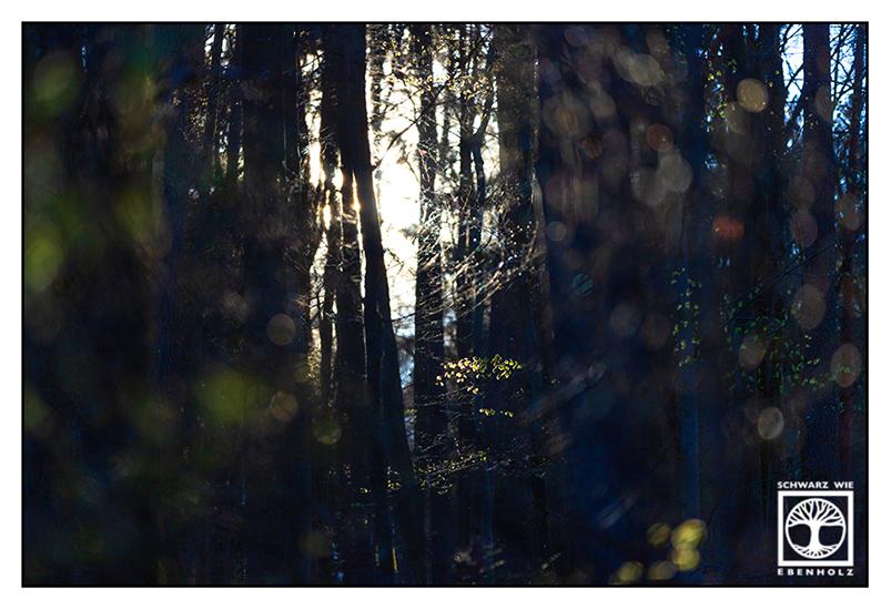 backlight trees, backlight branches, backlight forest