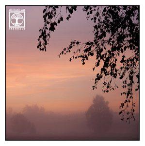 pink sunset, foggy trees