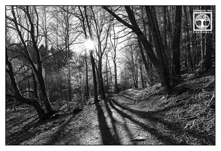 forest blackandwhite, point line area photography, lines, forest, Gelterswoog