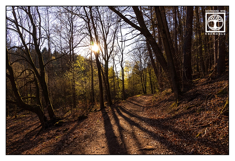 forest, forest track, forest in spring, forest path, light and shadow