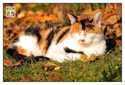 three colored cat, sleeping cat, autumn cat