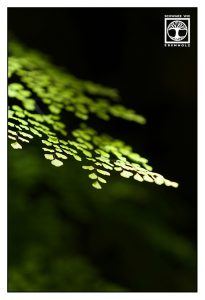 fern leaf, fern leaves, green leaf, los tilos, la palma