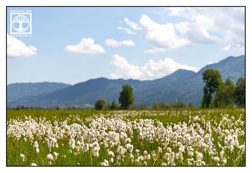 spring meadow, mountain meadow