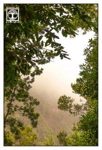 foggy forest, laurel forest, la galga, la palma