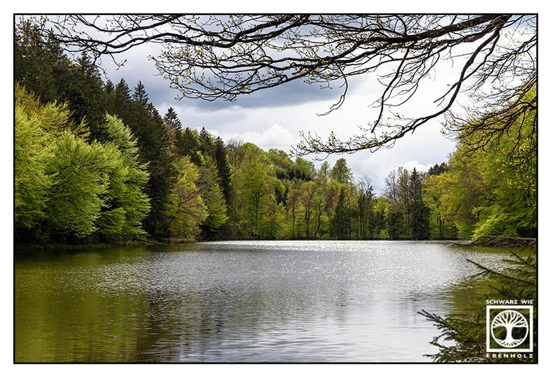 Thanning, Thanninger Weiher, lake in spring, lake, spring, springtime