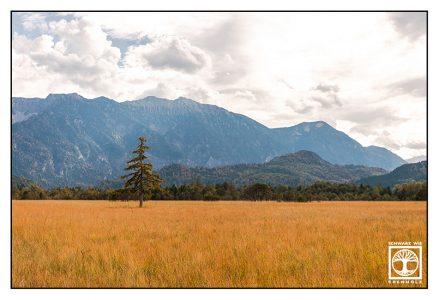 Murnau, Murnauer Moos, marsh, mountains, bavaria, germany, lonely tree