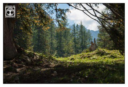 Austria, green forest, forest summer, mountain forest