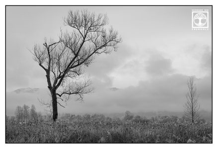 lonely tree, dead tree, foggy tree, tree fog, Schlehdorf, lonely tree blackandwhite