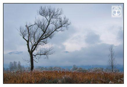 lonely tree, dead tree, foggy tree, tree fog, Schlehdorf