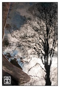 tree reflection, reflections water, reflections lake, surrealism, surreal photo, surreal photography, kaiserslautern, japanese garden kaiserslautern