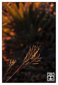 orange grass, fire