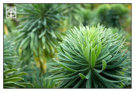 grüne flauschige pflanze, grüne Blätter