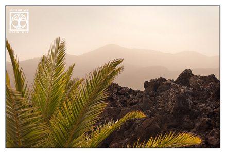 lava, lava flows, palms, volcano, volcanic landscape, geology, la palma, fuencaliente