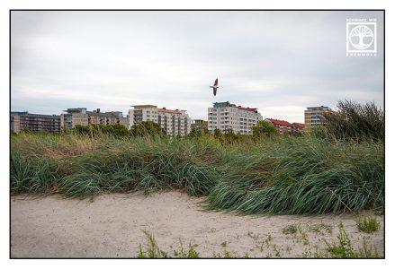 fliegende Schwalbe, schwalbe im Flug, Malmö, Malmö Strand, Schweden