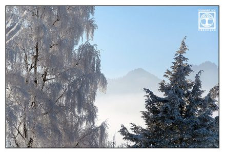 winter trees, snowy trees, snowy willow, foggy mountains