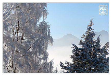 Bäume Winter, Bäume Schnee, Berge Nebel