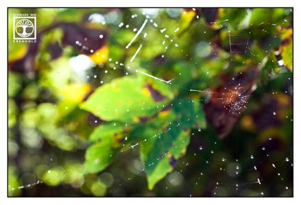 spiderweb drops, cobweb drops, spiderweb waterdrops