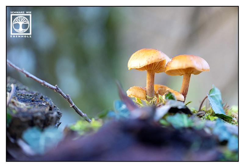 orange mushroom, orange mushrooms