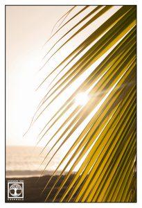 backlight palm leaf, backlight palms, backlight palm leaves