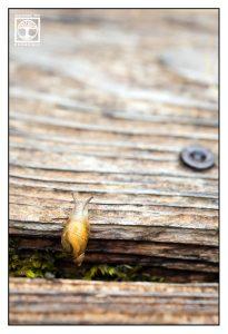 snail, tiny snail, yellow snail, cute snail