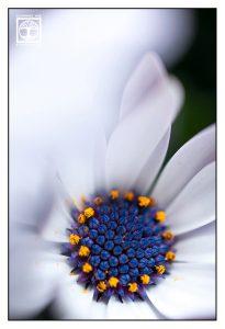 white flower, flower macro