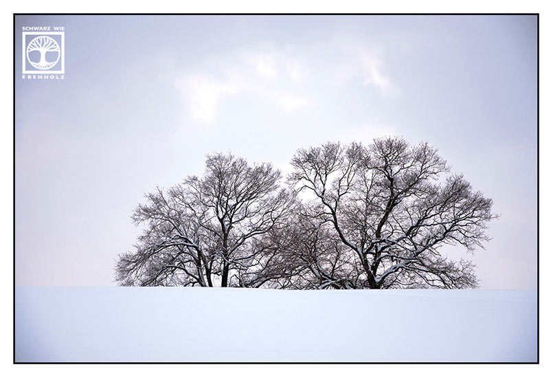 winter trees, nature photography