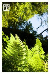 fern leaves, fern leaf, forest, green forest, forest summer, los tilos, la palma
