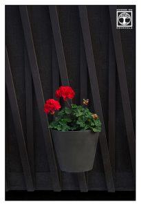 cranes bill, geranium, pelargonium, storksbill, red geranium, red pelargonium, red storksbill