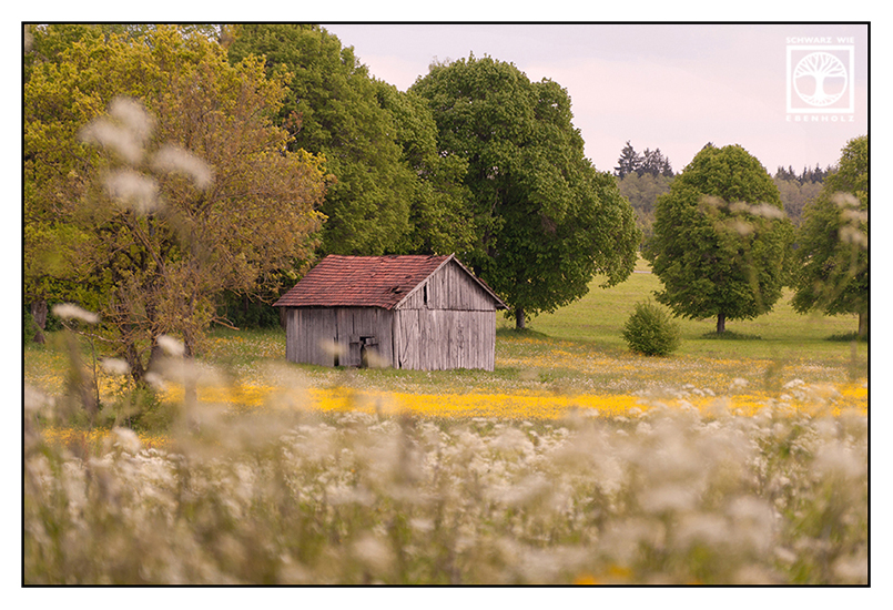flower meadow, countryside, barn spring, rural landscape, spring, barn field