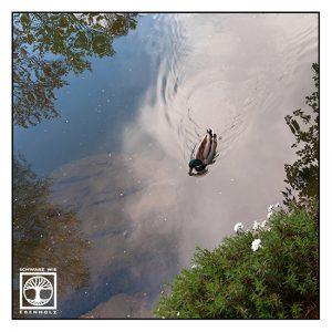 Surrealismus, Surreale Fotografie, Reflexion Wasser, Spiegelung Wasser, Spiegelung See, Ente, Stockente