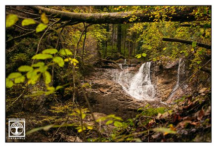 waterfall forest, lainbach waterfalls, lainbachfälle, kochel, bavaria, germany