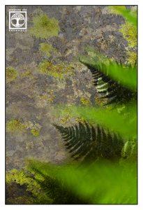 abstrakte fotografie, farn
