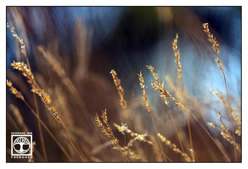 wind, grass in the wind