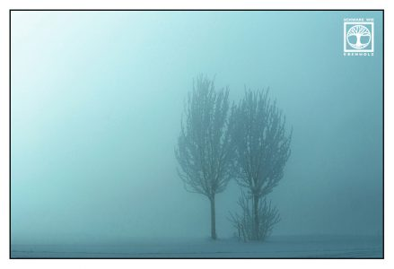 winter trees, snowy trees, winter fog, foggy winter